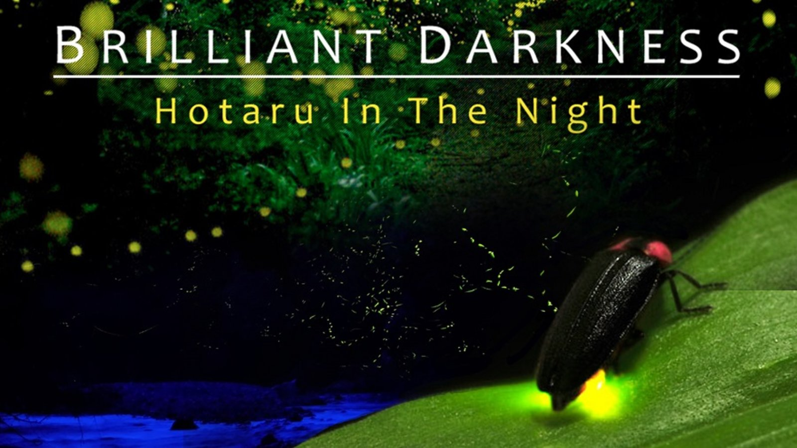 Brilliant Darkness - How Artificial Lights Affect Fireflies